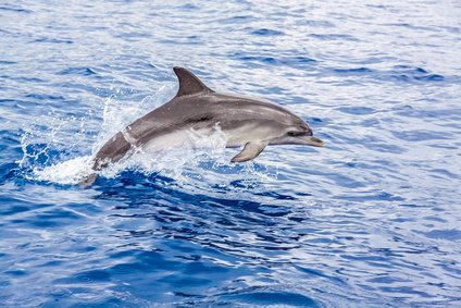 Dolphin off the coast of County Kerry